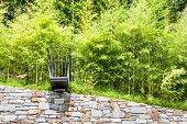forest of bamboo canes and stone wall, outdoor