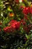 Beautiful Of Red Flower Spike In The Garden