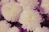 Soft Focus Of White Chrysanthemum  Flower Bouquet