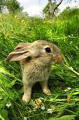 Cute Gray Rabbit
