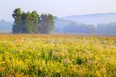 picture of muzzy  - A trees cluster in morning light with delicate fog over meadows - JPG