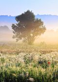 picture of muzzy  - A tree in morning light with delicate fog over meadows and hazy forest stripes - JPG