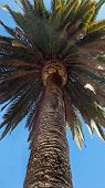 foto of bottom  - Summer palm tree plant bottom view perspective - JPG