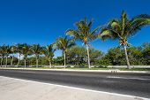picture of caribbean  - Caribbean street road with palm trees, caribbean
