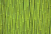 picture of bamboo forest  - Green bamboo - JPG