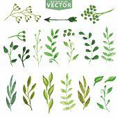 image of laurel  - Set of watercolor green branches and laurels - JPG