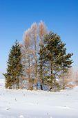 Frosten Trees, Winter Landscape