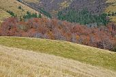 Autumn hillsides