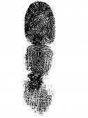 Full Fingerprint 5