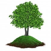 pic of naturel  - Illustration of a realistic 3D tree growing on a grassy hill - JPG