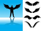 Vector - Collection of detailed angel or bird wings.