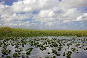 image of airboat  - Scene in the Everglades Florida off the bow of a airboat - JPG