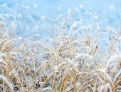 First Snowfall Impression