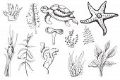 Ocean Sea Watercolor And Graphic Handpainted Elements With Corals And Underwater Animals. Black  Whi poster