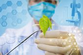 A Closeup Of Laboratory Assistant Keeping A Plant Sample With The Medical Clamp And Combs Structure  poster