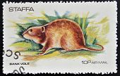 STAFFA - CIRCA 1973: stamp printed in Staffa shows bank vole circa 1973