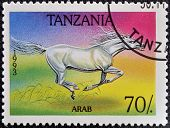 TANZANIA - CIRCA 1993: Un sello impreso en Tanzania muestra caballo árabe alrededor de 1993