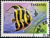 TANZANIA - CIRCA 1995: A stamp printed in Tanzania showing Angelfish circa 1995