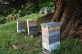Bee Hives Under The Tree