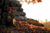Autumn Woodpile