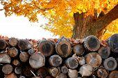 Woodpile In Autumn