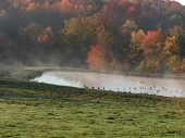 Geese Pond Fall Landscape