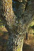 trunk textures