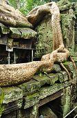 Ta Prohm In Angkor Wat, Siem Reap, Cambodia