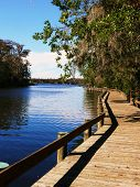 Boardwalk On Lake Tarpon