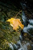 Yellow Leaf In Stream