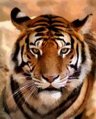 stock photo of pointed ears  - Portrait Painting of Tiger Face with Slightly Open Mouth - JPG