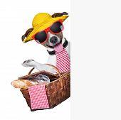 Perro de picnic
