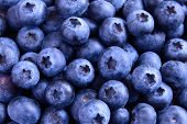 stock photo of berries  - Background of Fresh Ripe Sweet Blueberries - JPG