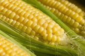 image of corn-silk  - Close up of sweetcorn with corn silk over cob - JPG