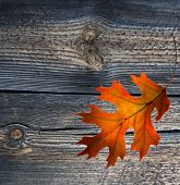 Red Autumn Leaf On Old Wood Background