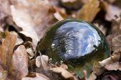 Spherical Globe Bowl