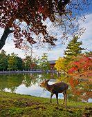 Deer at Todai-ji Temple grounds in Nara, Japan.