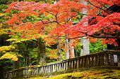 Autumn foliage in Nikko, Japan.