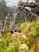 pic of windswept  - View of the Windswept Trees in nature daytime - JPG