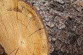 Close-up of chopped tree stump