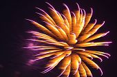 Orange and Purple Fireworks