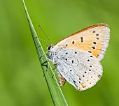 Orange Butterfly On Green Stem