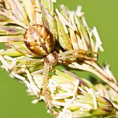 Brown Spider On Grass