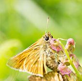 Orange Butterfly Macro