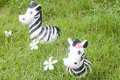 Zebra Doll On The Grass