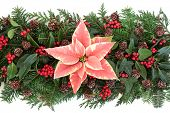 Poinsettia flower with fir, holly, ivy, mistletoe and cedar cypress leaf sprigs over white.