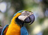 Portrait of a blue parrot