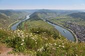 stock photo of moselle  - River Moselle near Zell and Punderich in Germany - JPG