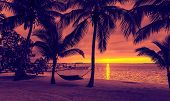 vacation, beach, summer and leisure concept - silhouettes of coconut trees with hammock on the beach, purple sunset view