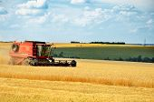 Red Combine Harvests Wheat In A Field